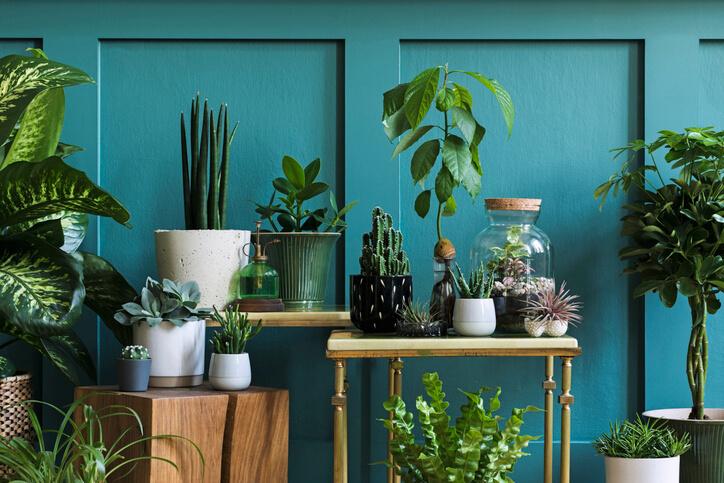 Indoor Garden Planting
