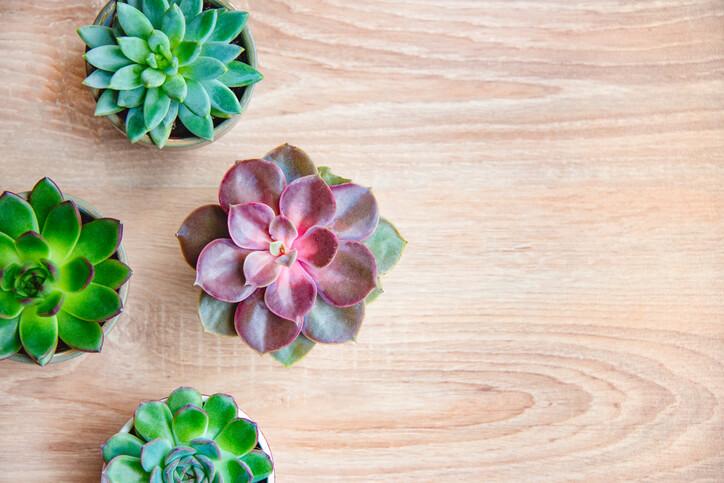 Indoor Garden Succulents