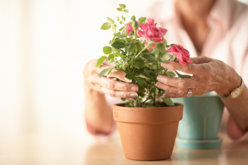 7 Tips for Indoor Gardening