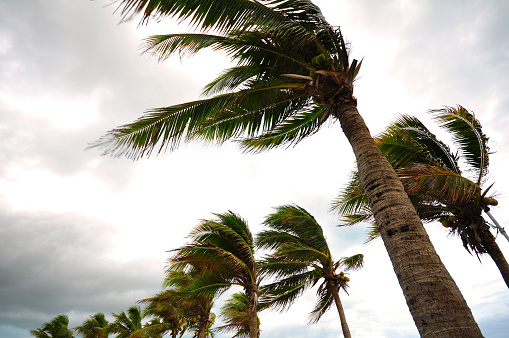 strong wind safety tips