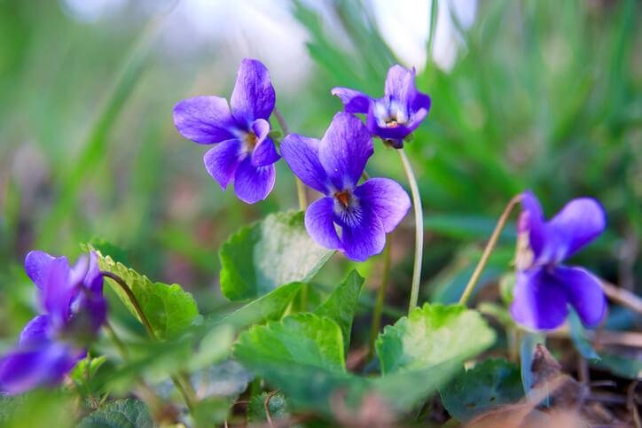 Bee-friendly garden flower