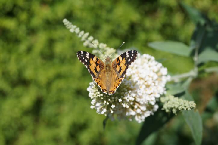 Bee-friendly garden ideas