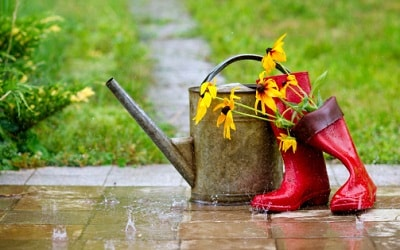 Garden books to read on a rainy day