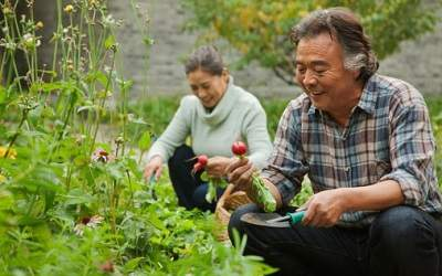 Tools and Tips for Older Gardeners ThinkstockPhotos-183343628-min__1491923088_162.136.192.1.jpg