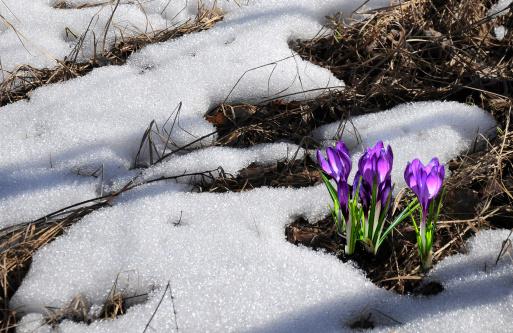 Spring thaw flooding