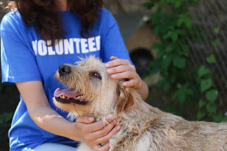 Benefits of Volunteering with Animals