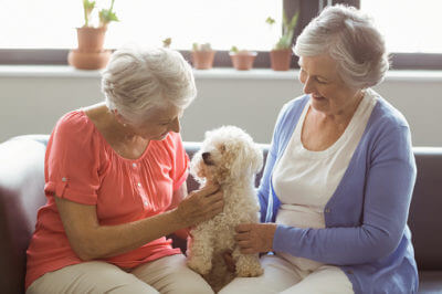 Lessening Loneliness and Isolation in Older Adults