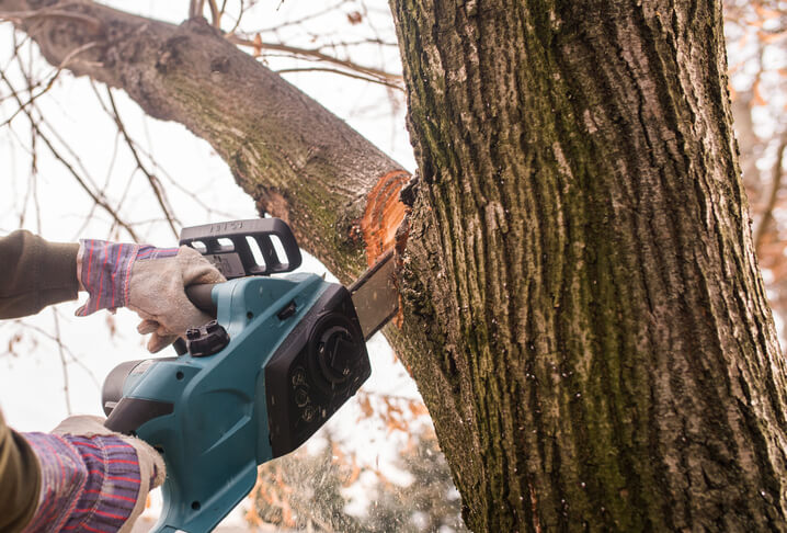 Trim trees for wind safety