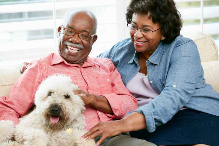 Five Reasons To Consider Adopting A Senior Pet