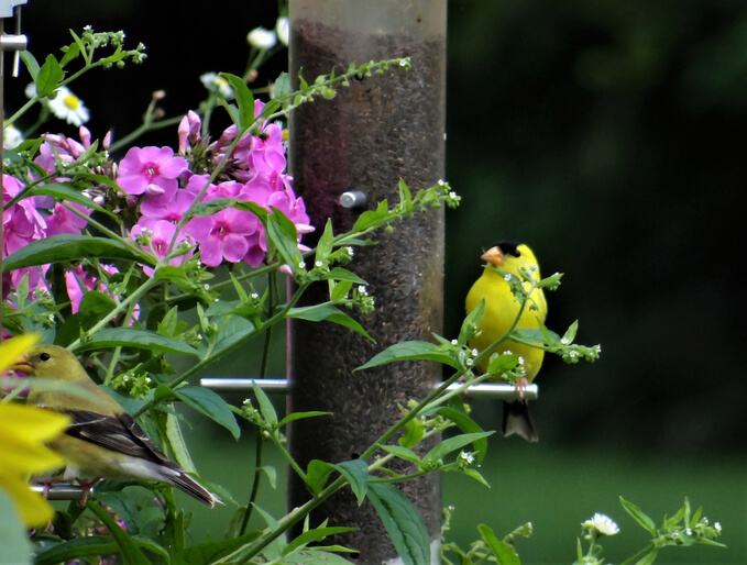 Create a Garden Wildlife Sanctuary