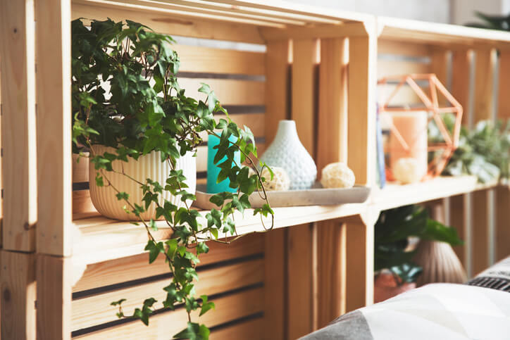English Ivy Plant on Shelf