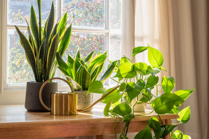 Plants for Health