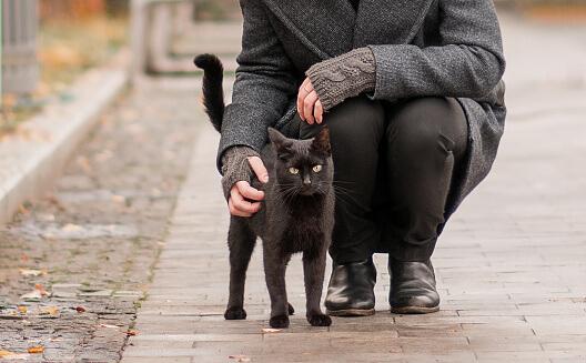 Creepy Superstition Black Cat Crosses Your Path